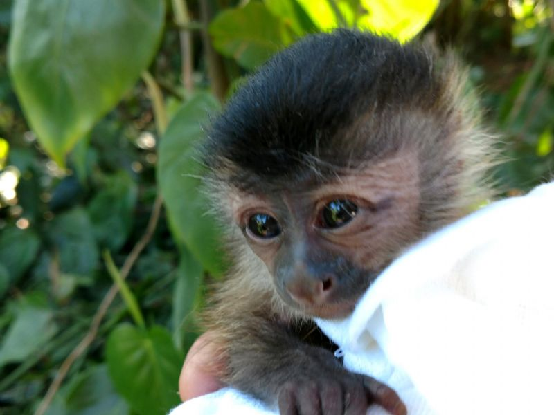Primate Store Monkeys For Sale